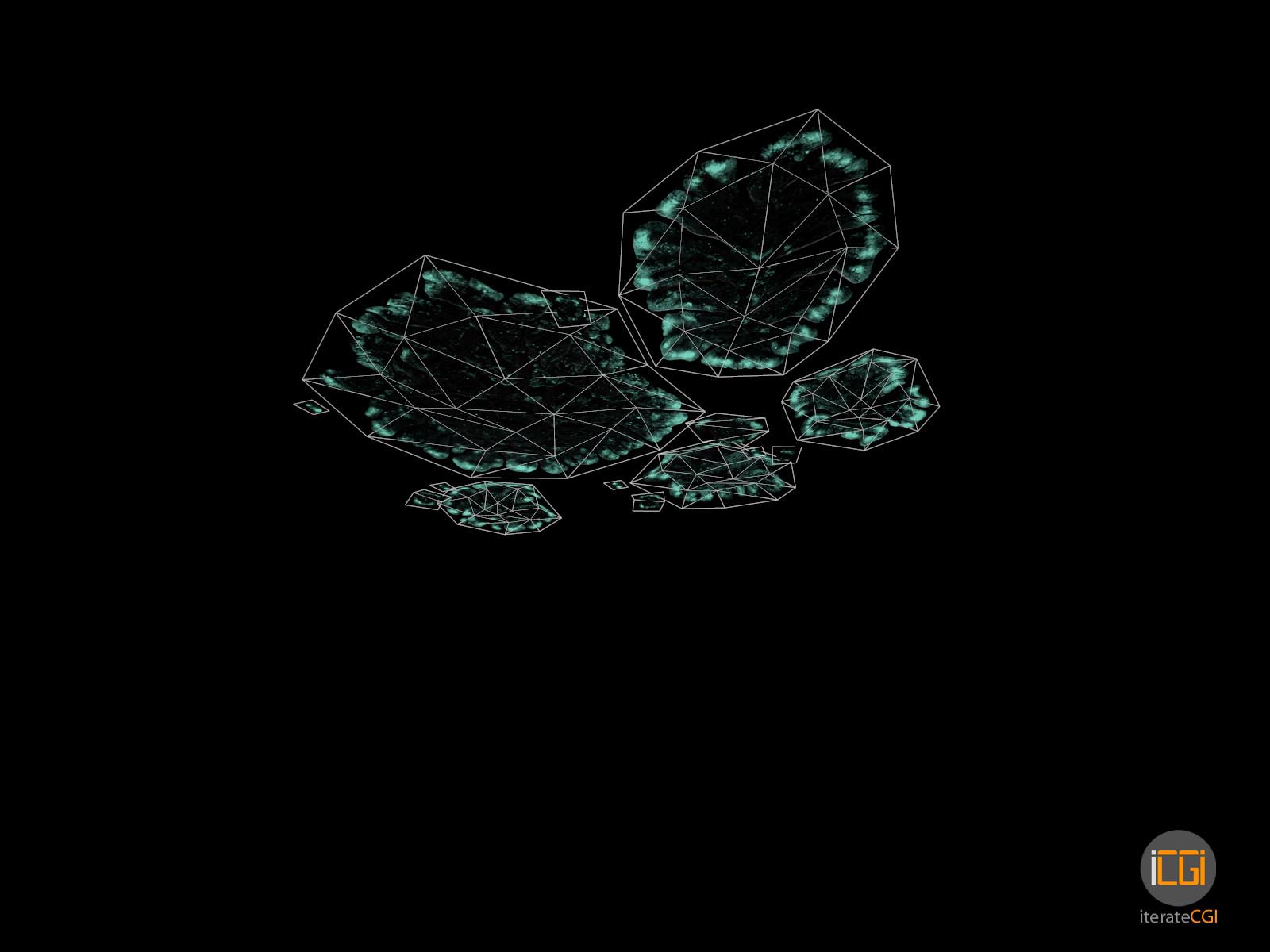 Johan de leenheer alien plant lichen type1 16