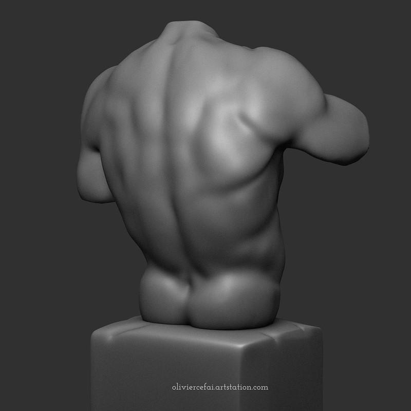 Male back anatomy study