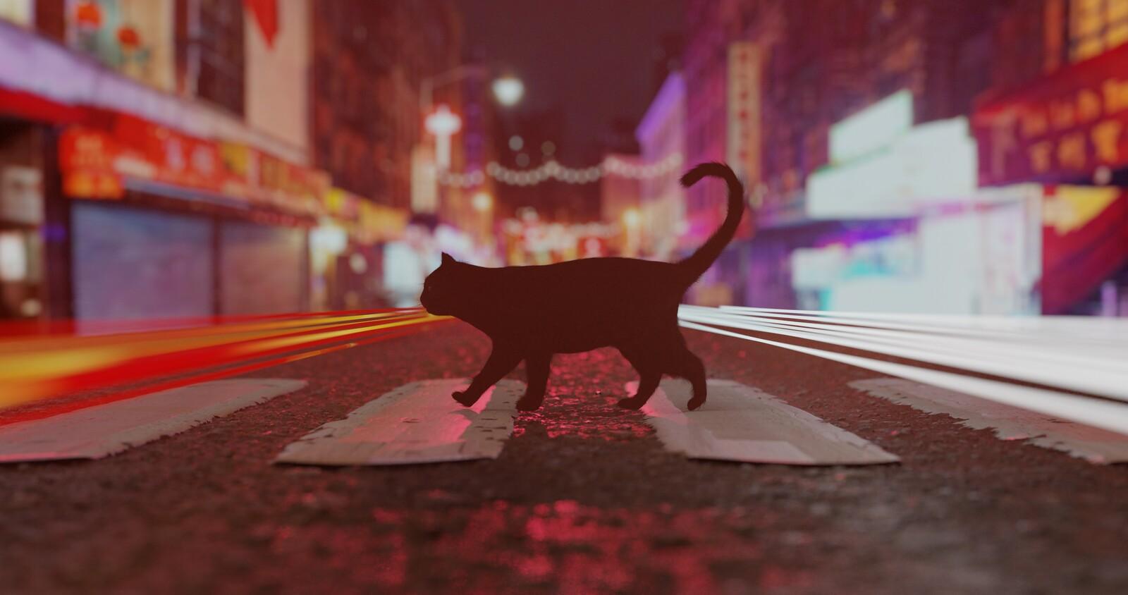 Cat walking on road (original light DOF version)