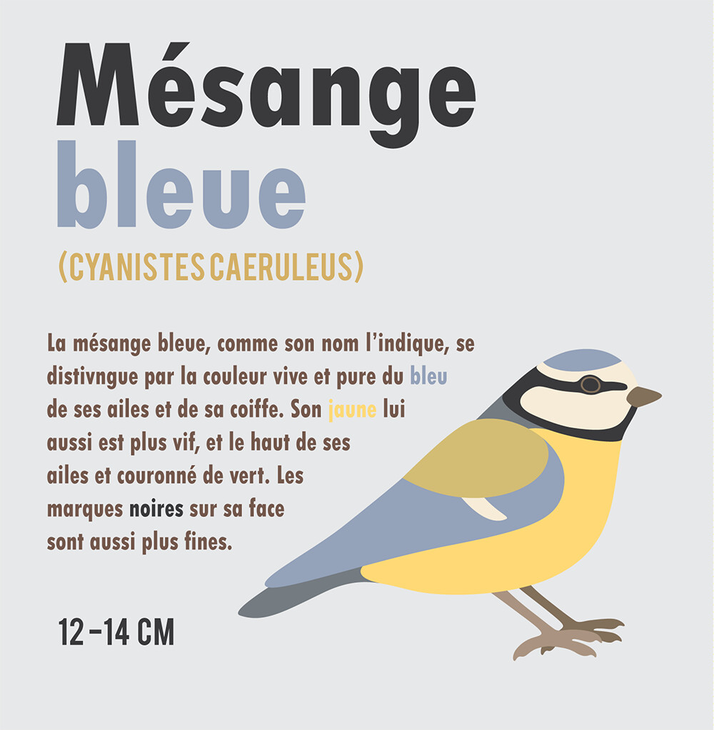Clemence sanches mesange2