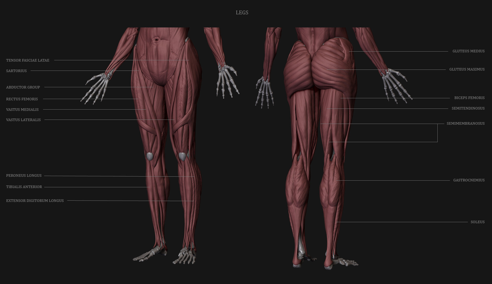 Sanket tonde legs