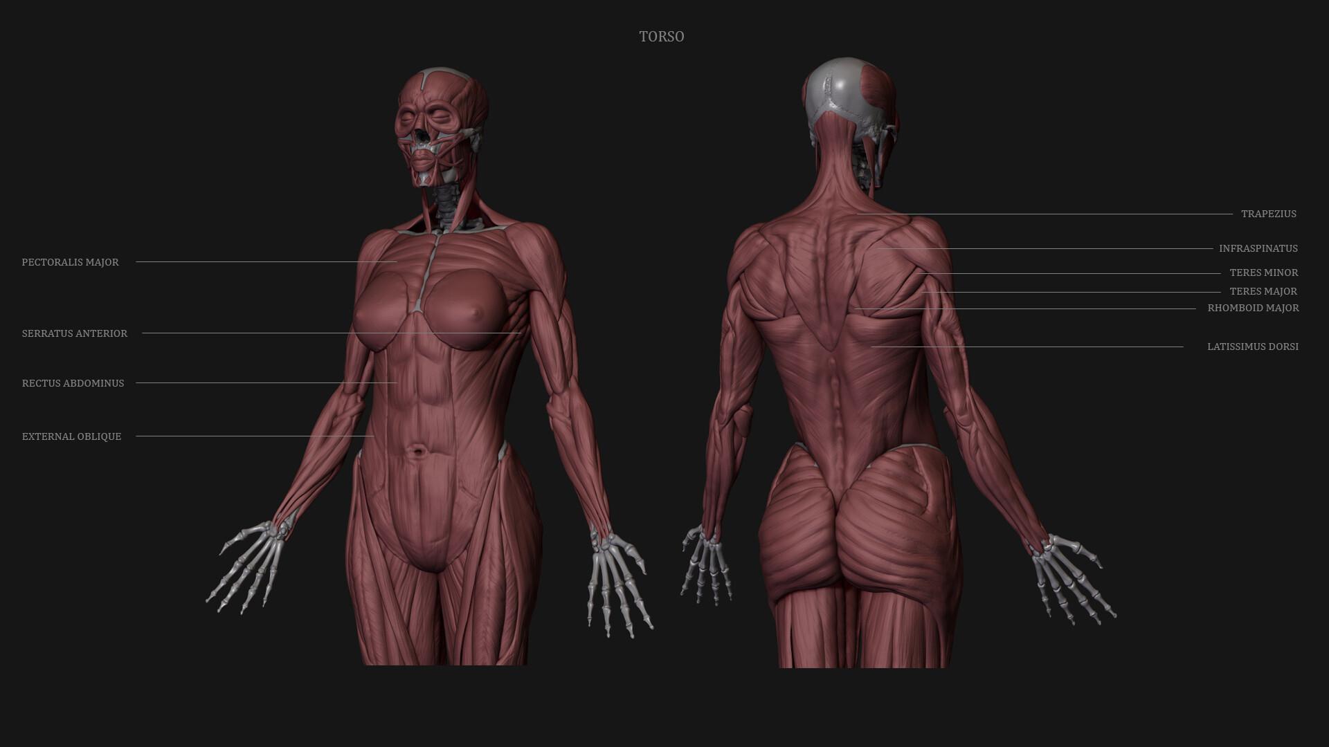 Sanket tonde torso