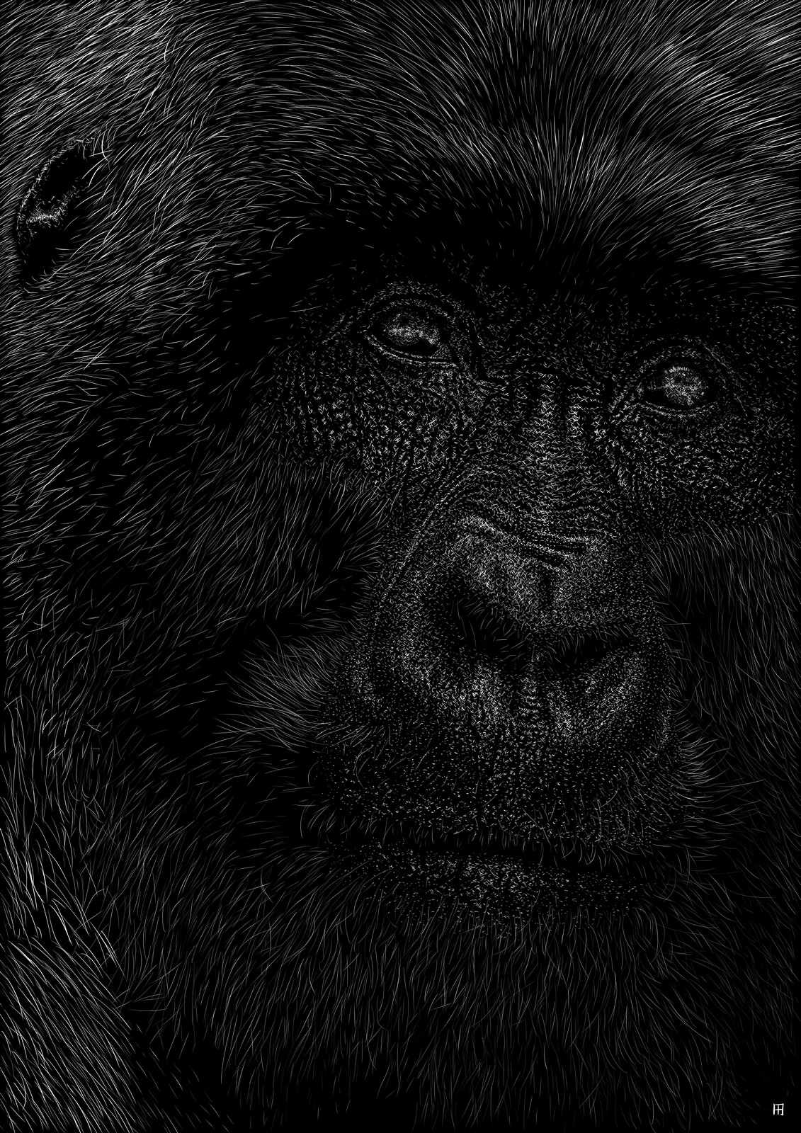 hominoidea