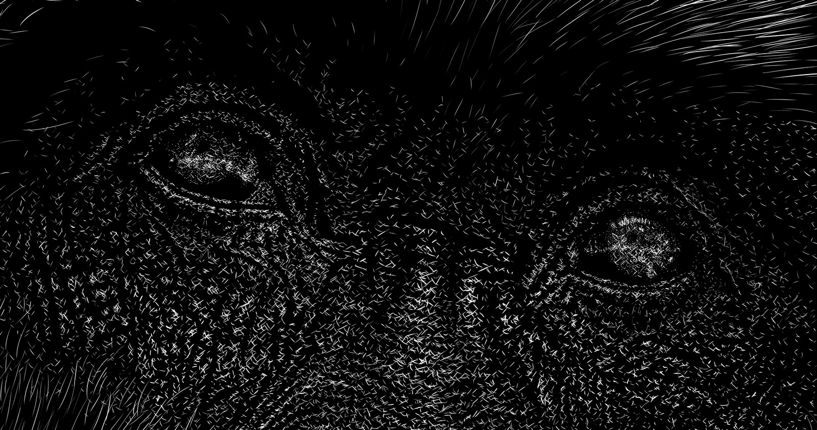 hominoidea, close-up Digital scratchboard, jan. 2019