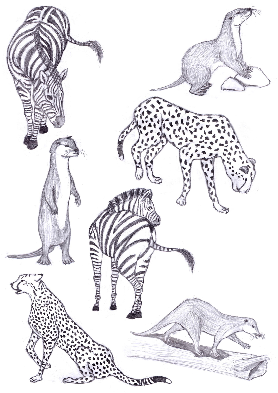 Life drawings animals