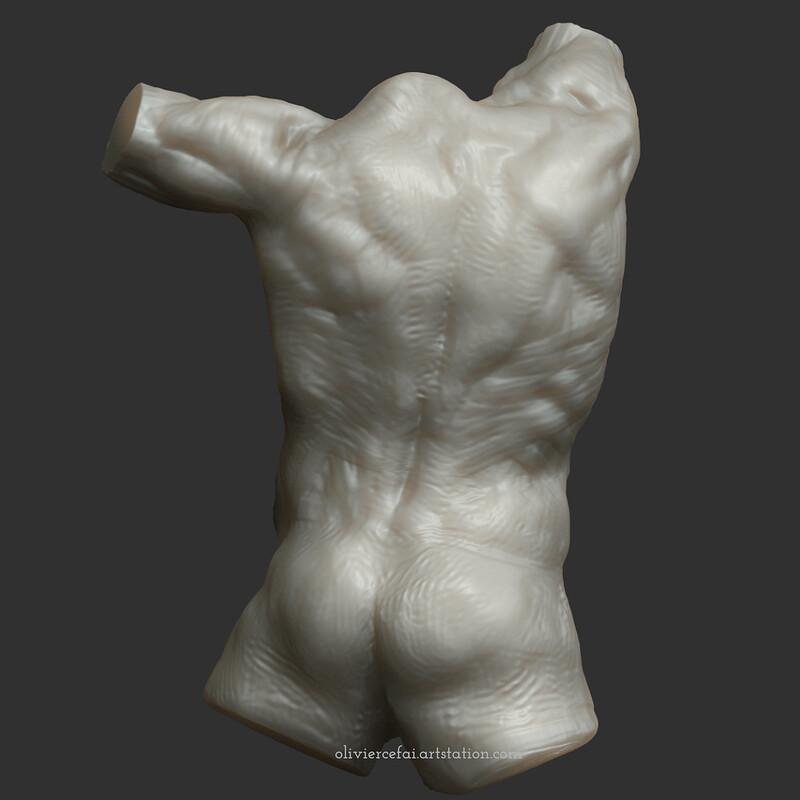 Anatomy study, sporty male torso back