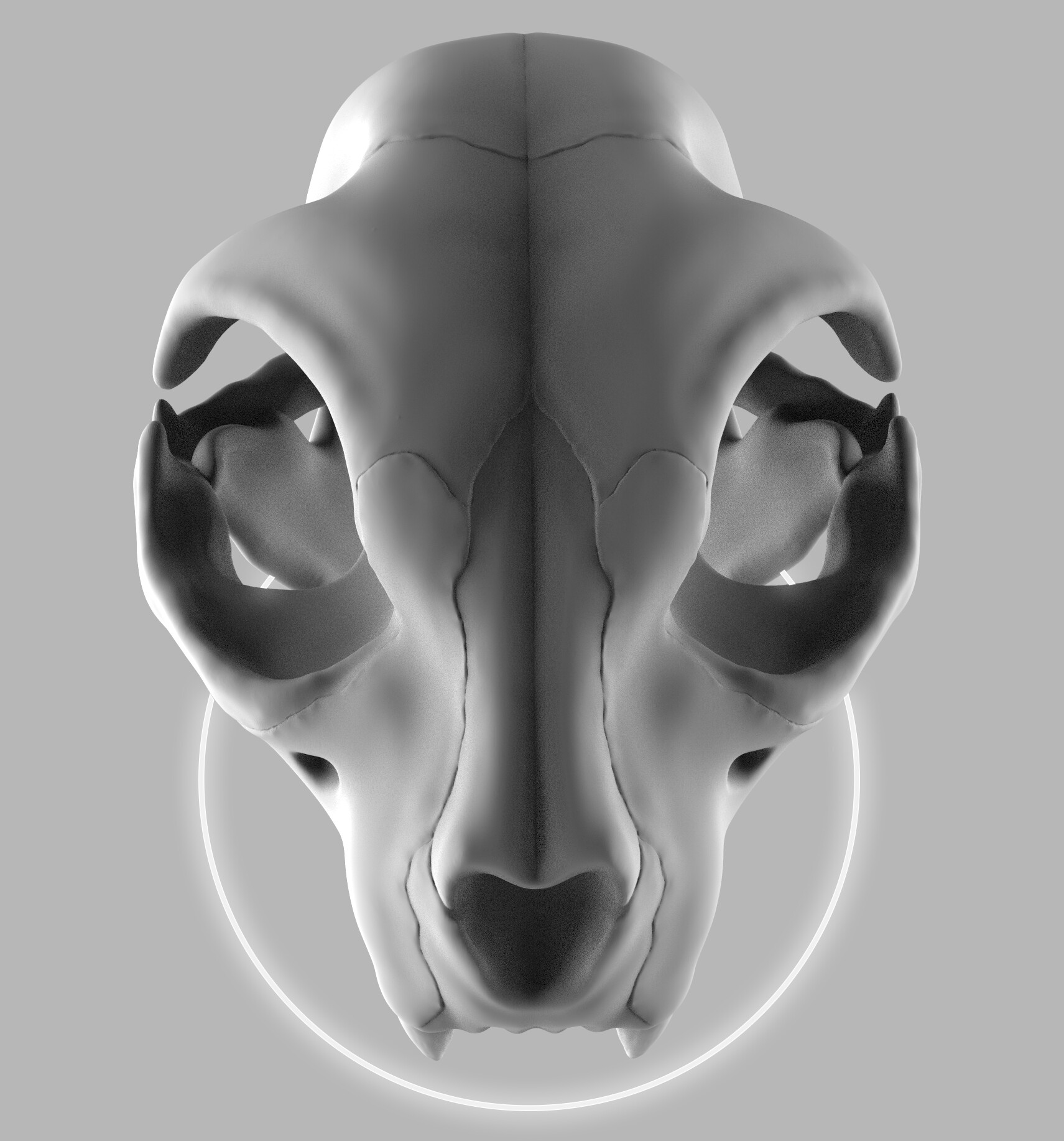 Laurene Lejeune Cat Skull Anatomy Practice
