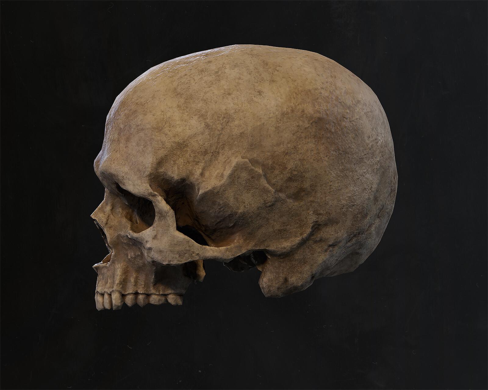 Ben nadler skull 001
