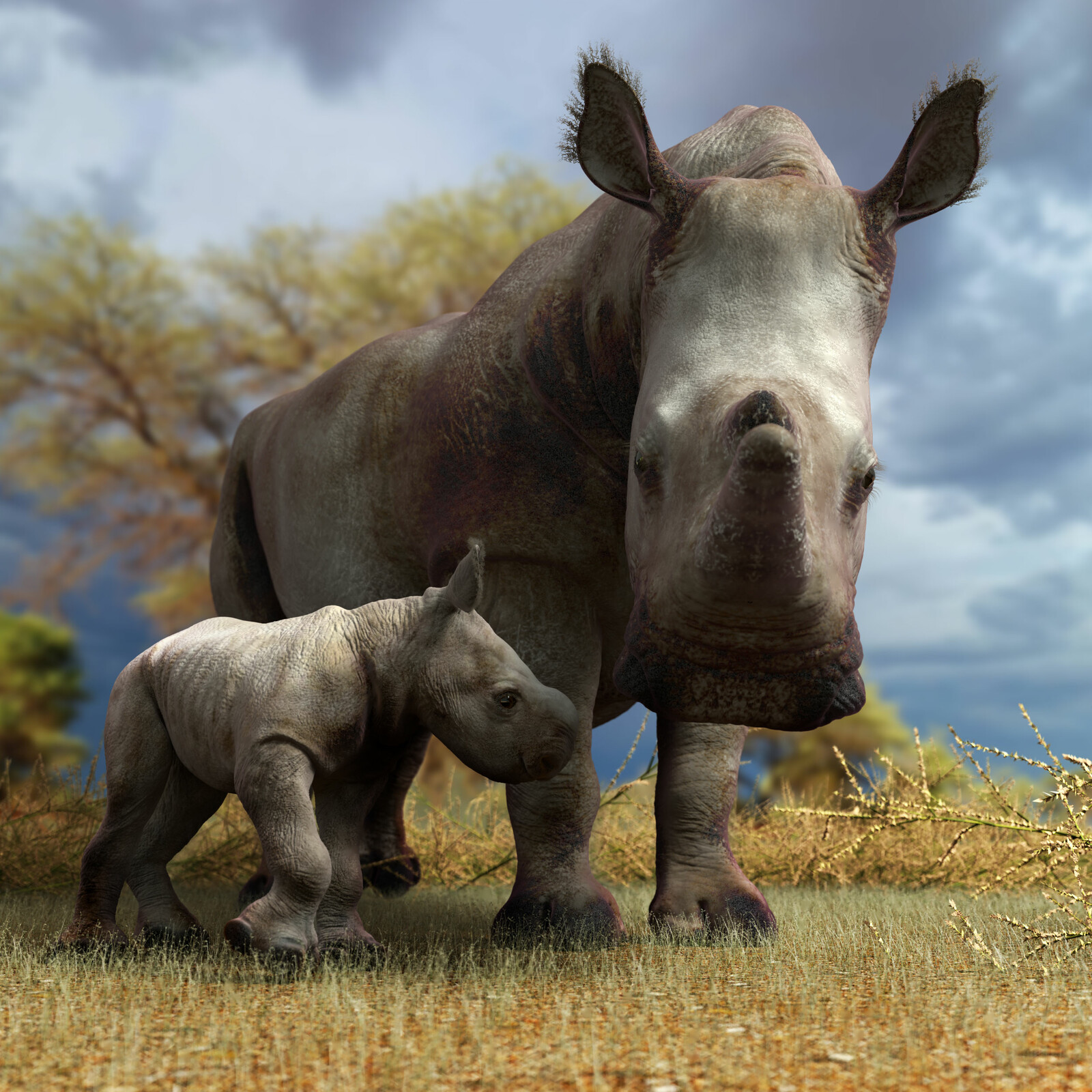 Mother and Daughter. White Rhino