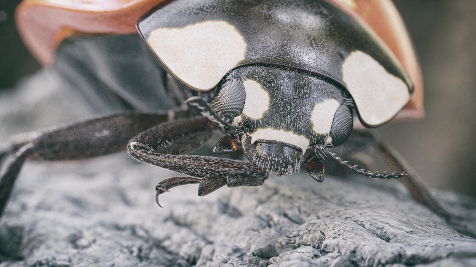 Ladybug Macro-Render