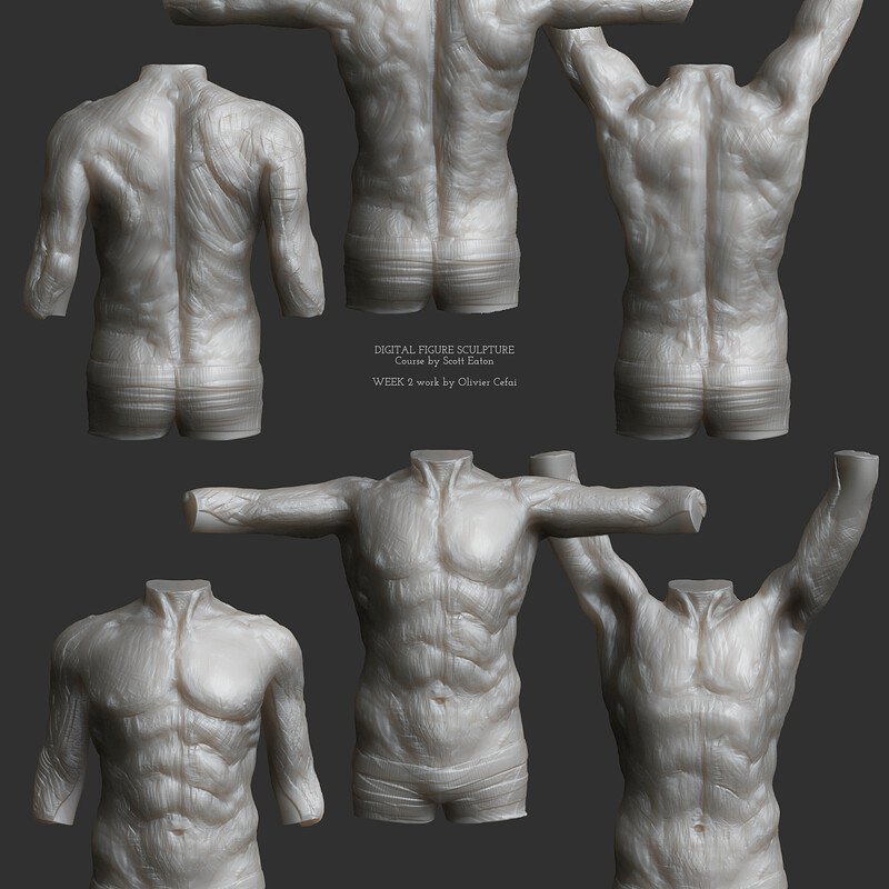 Anatomy Study - Muscles motion (male torso)