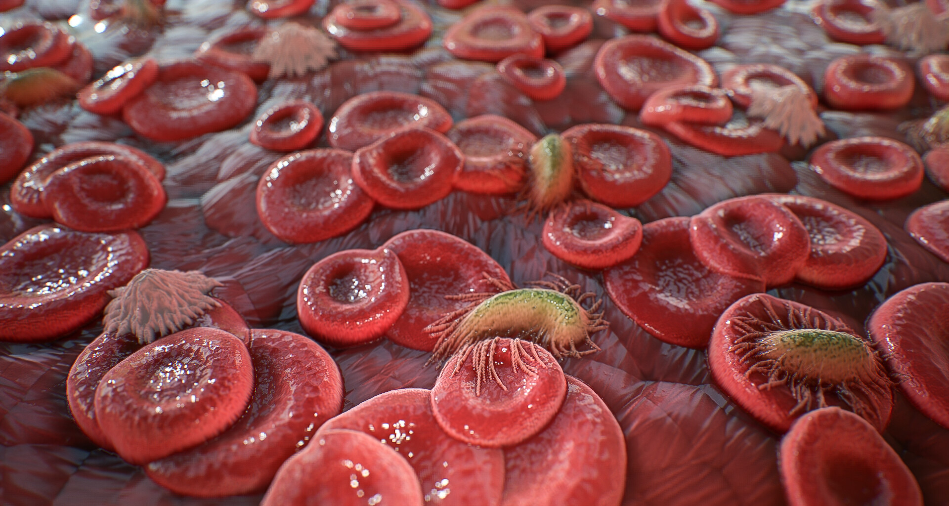 Blood cells Material on a plane
