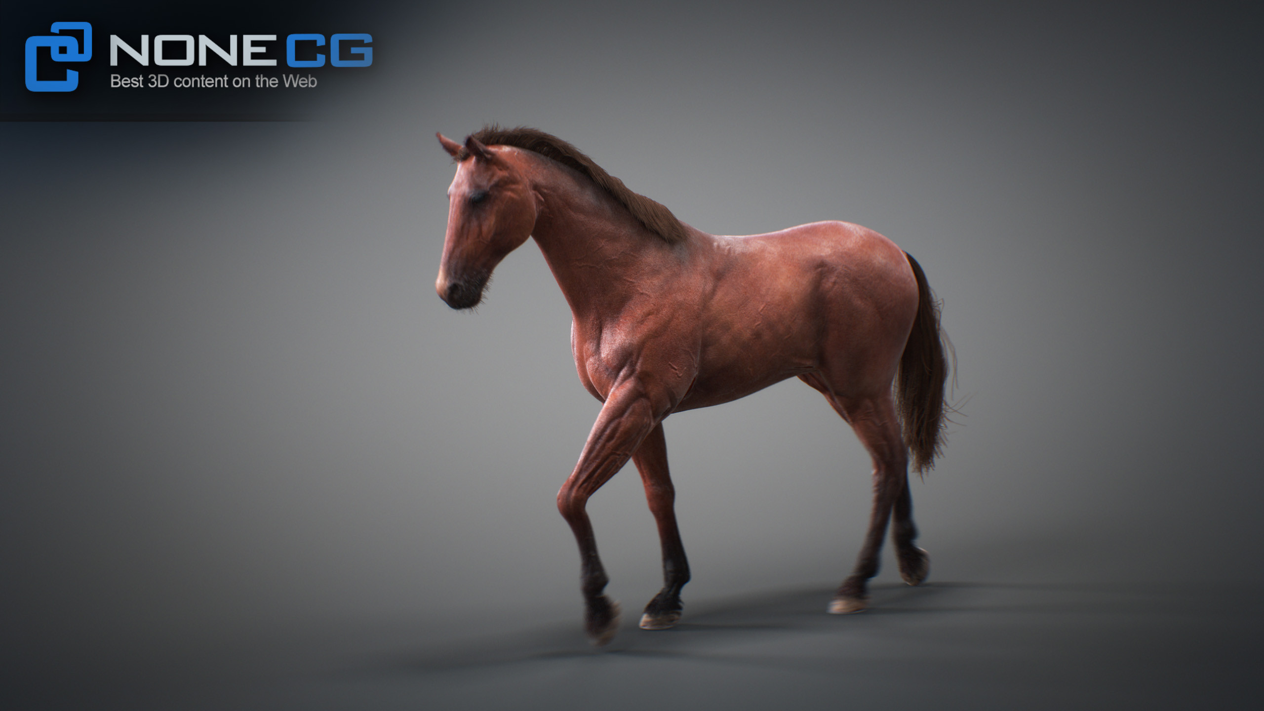 3D Horse Animated by NoneCG