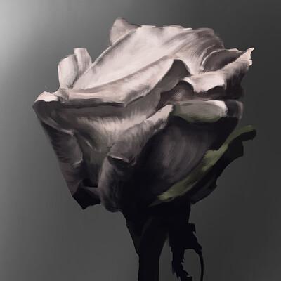 Kane sedonja flower