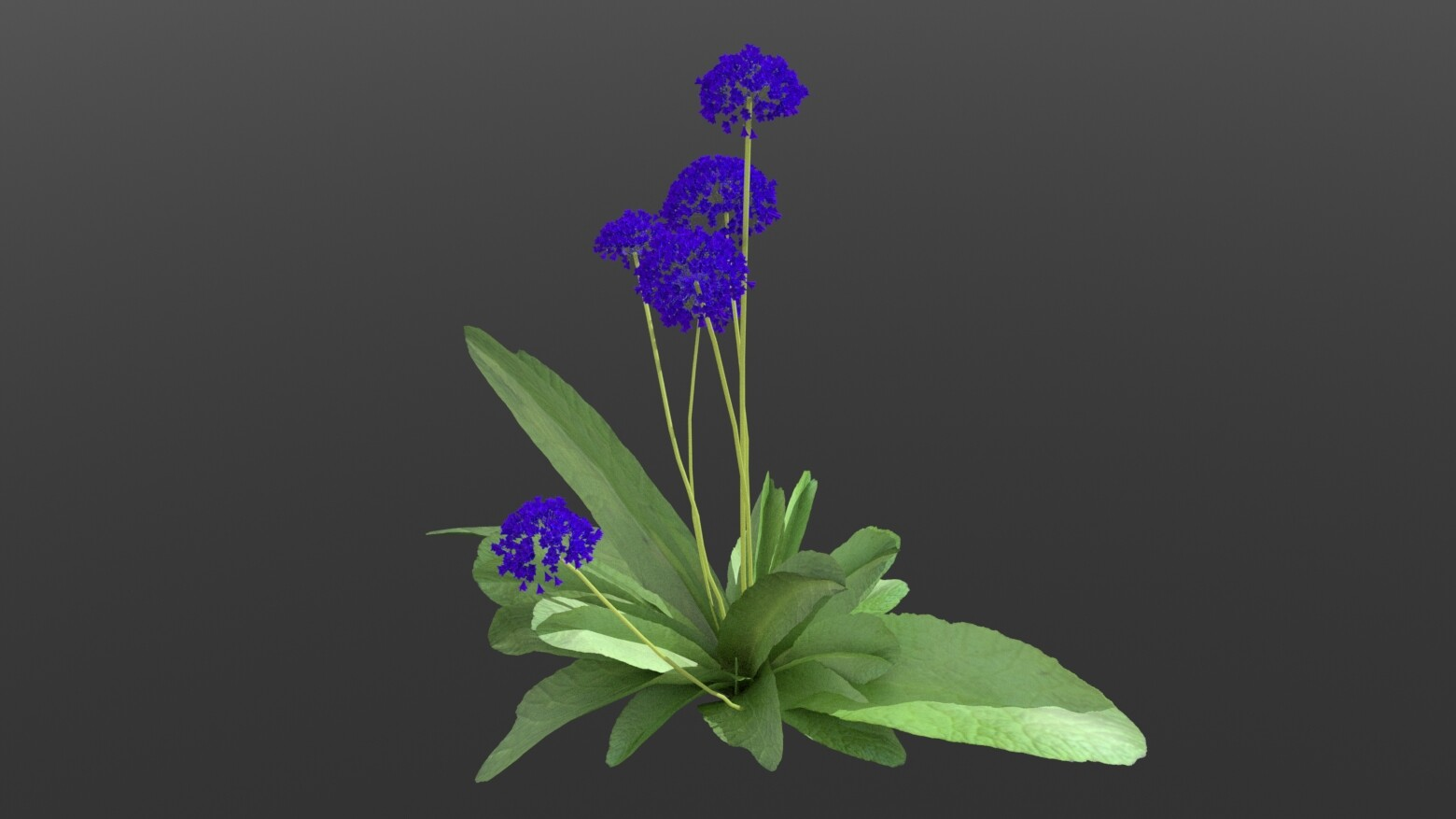 Old work - flowers on modeled statice plant