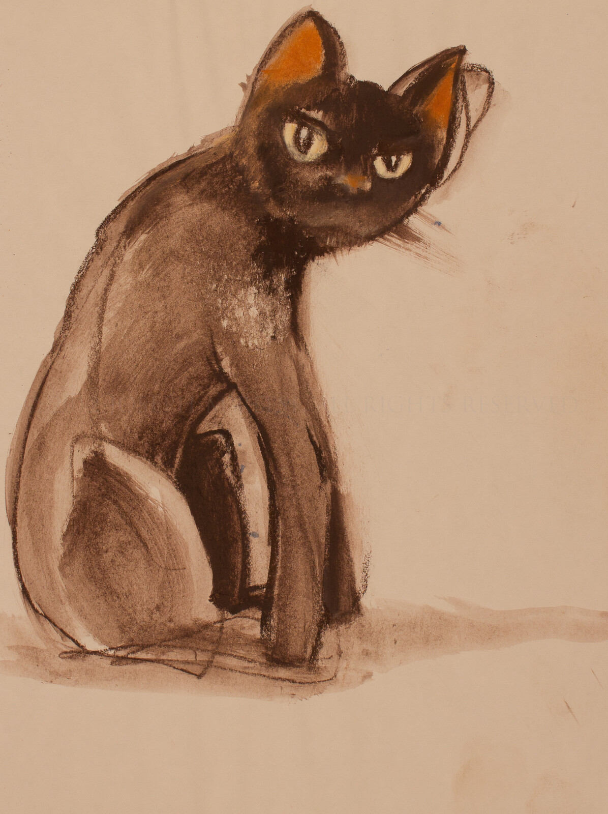 Conte sketch of Ozzy the cat. An ever-suspicious creature with insatiable curiosity.