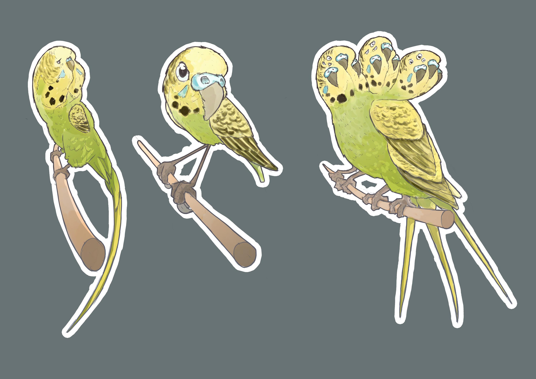 Warp parakeets