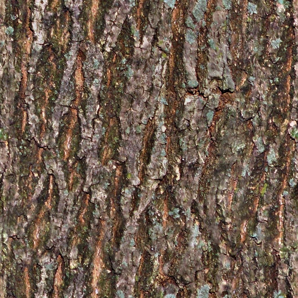 Charlie foreman treebark ref