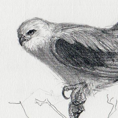 Ergo proxy blackwing kite study1