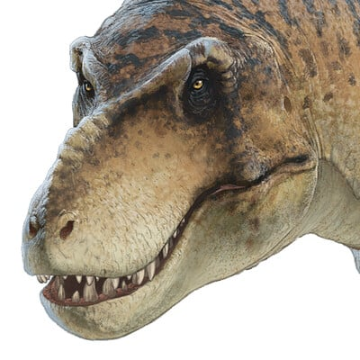 Fred wierum rex 4