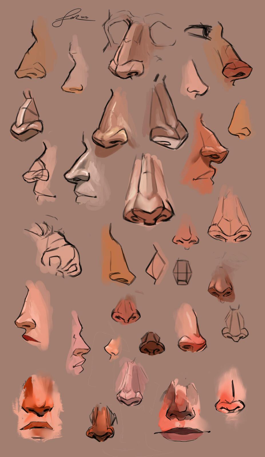 Anatomy Study | Noses