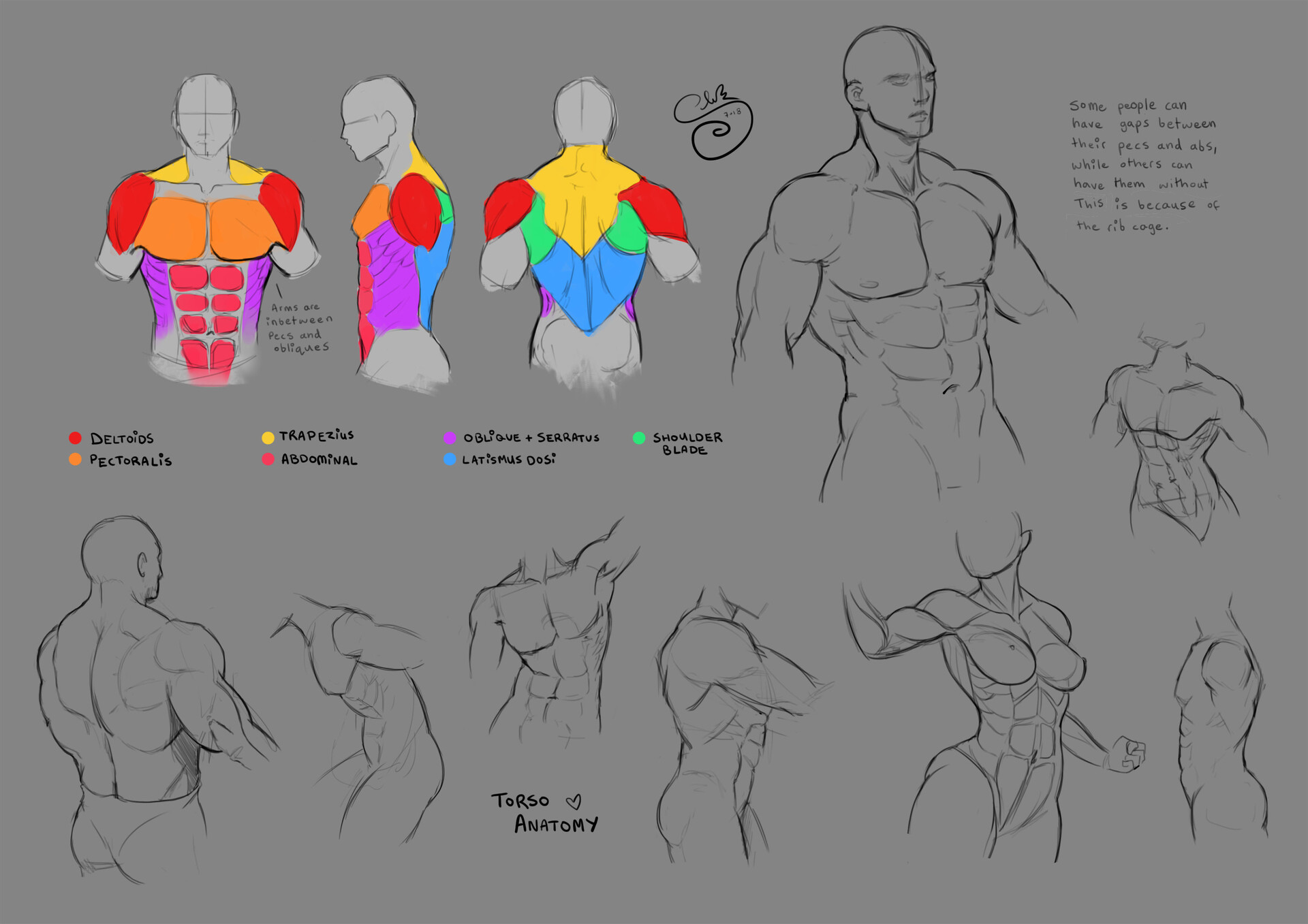 Shellz art study torso
