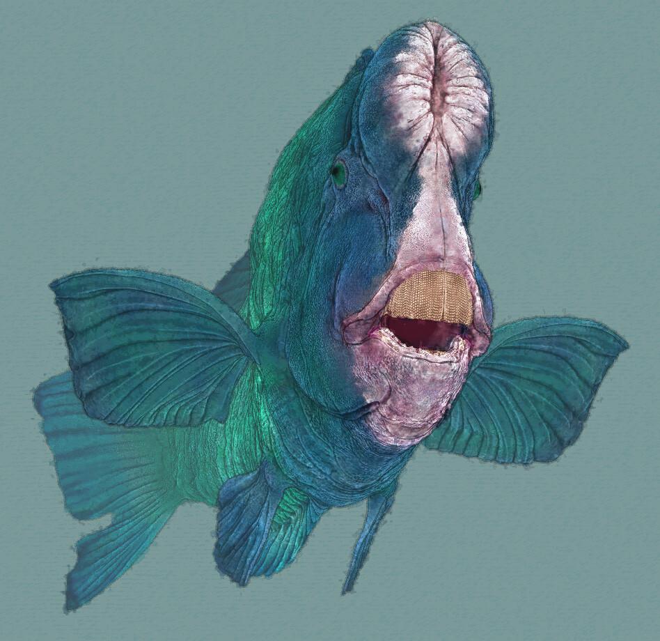Eric keller parrotfish 02