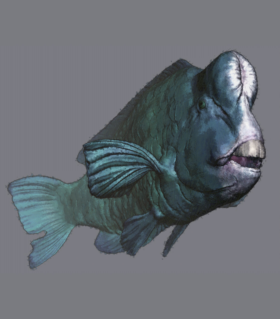 Eric keller parrotfish 04