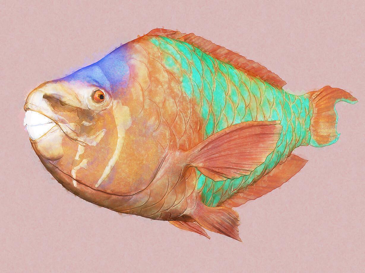 Eric keller parrotfish 05