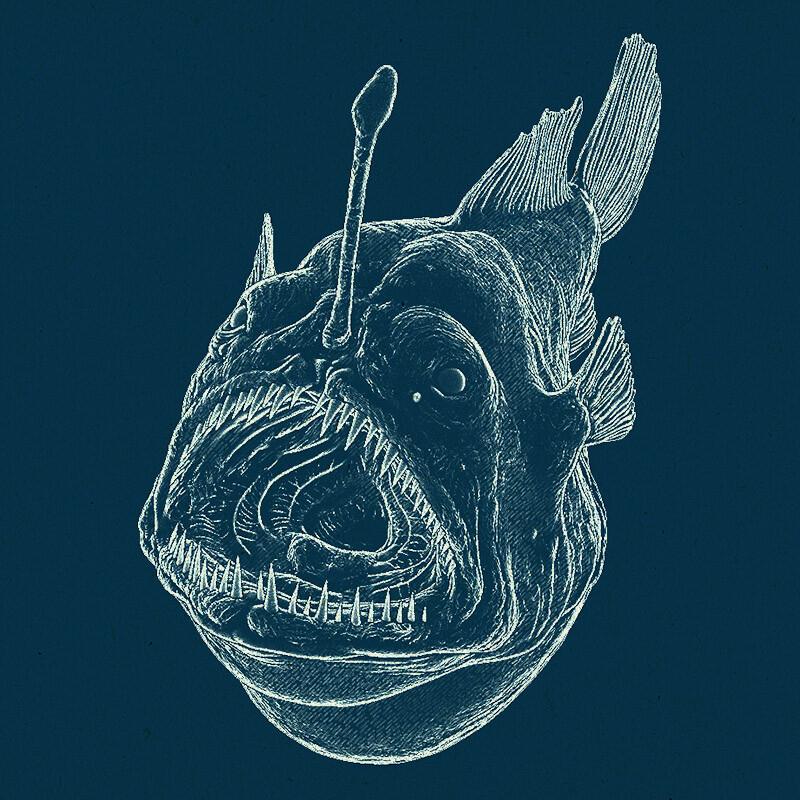 Dirk wachsmuth anglerfish npr 02 bydirkwachsmuth