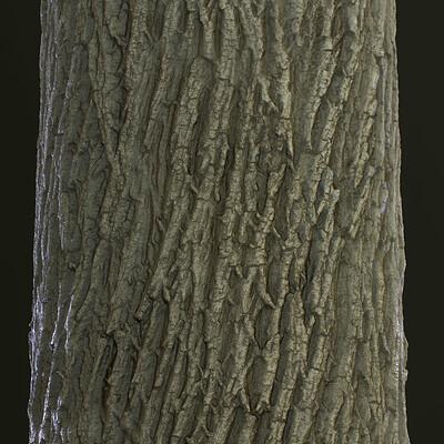 Hauke thiessen forestground render2