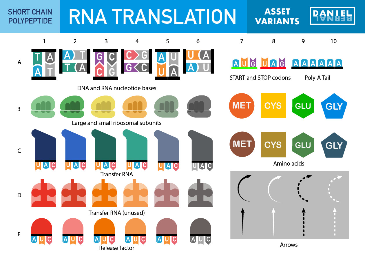 Daniel bernal 01a rna translation bernalstudio 01