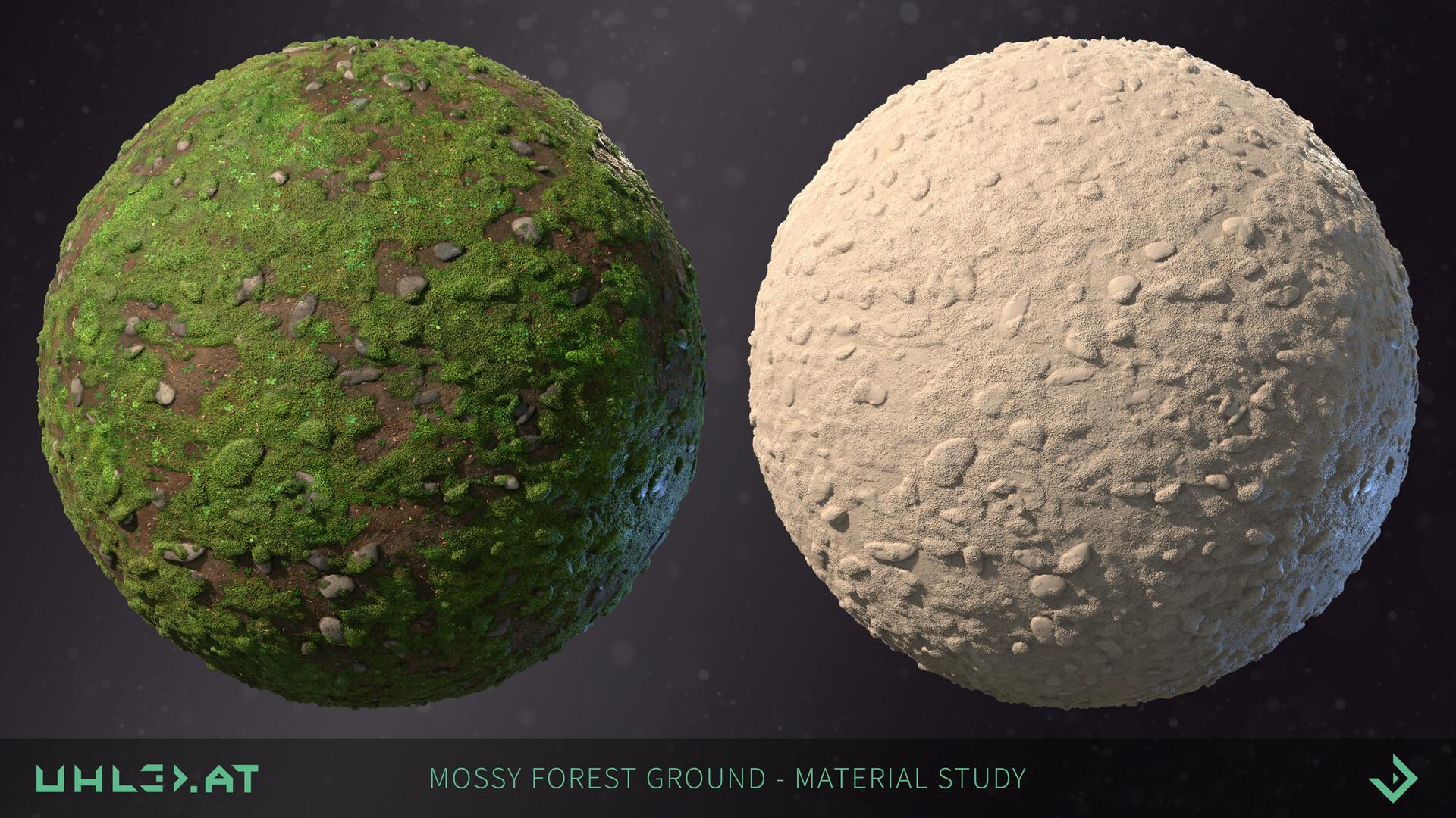Dominik uhl mossy forest ground 01