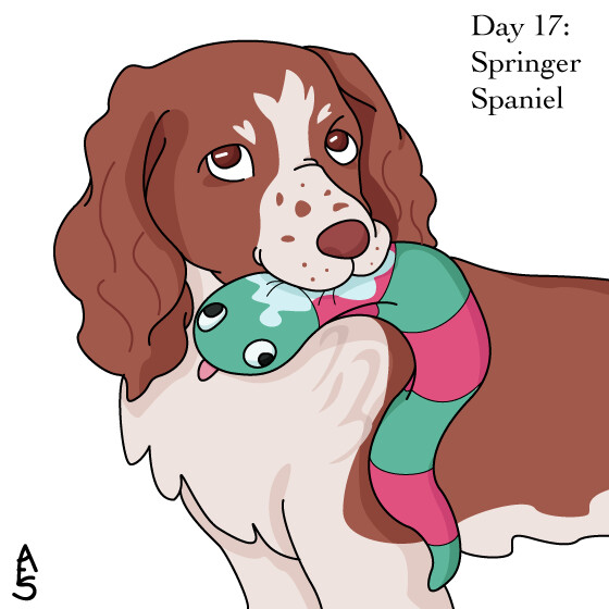 17: Springer Spaniel