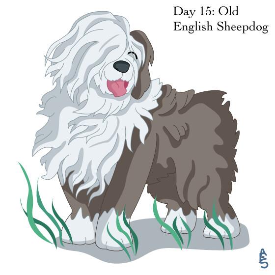 Amy seaman 15 sheepdog
