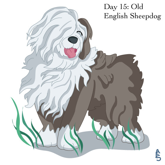 15: Sheepdog