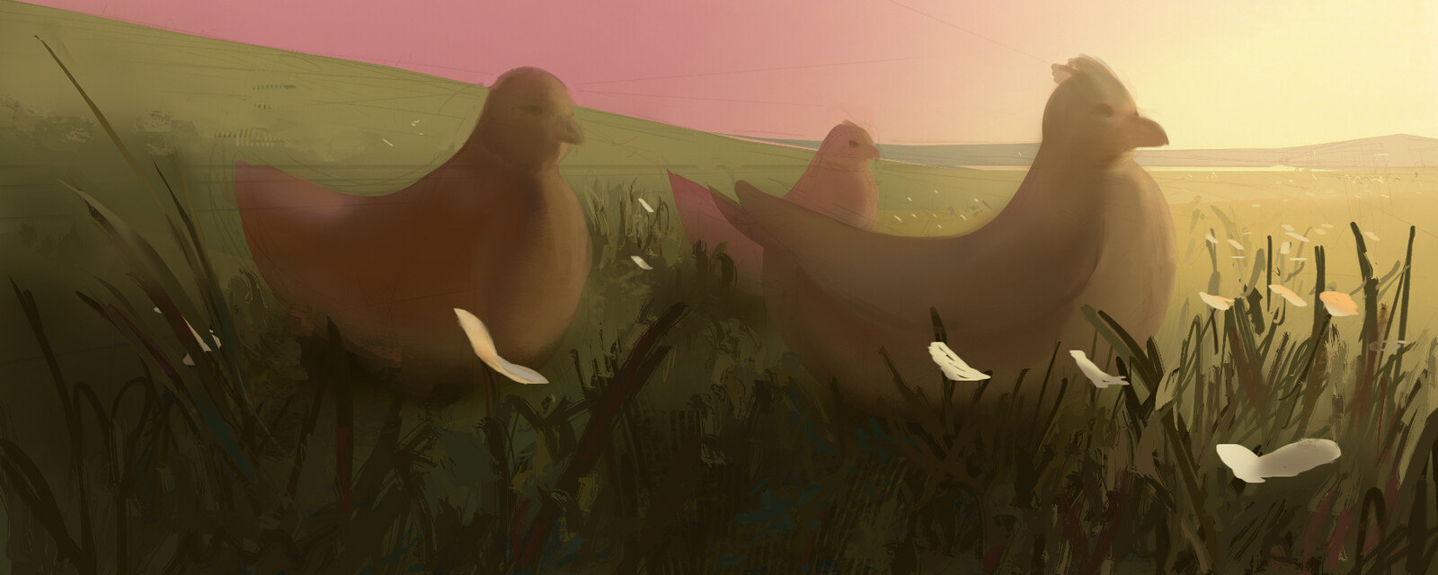 field chickens