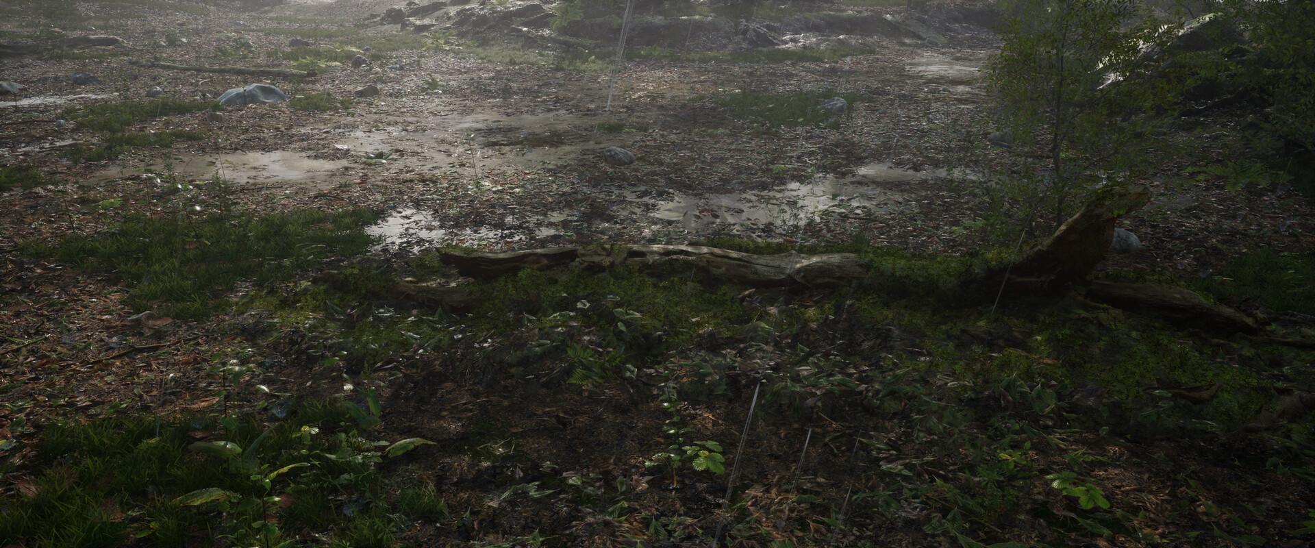 B o w qin forest land rain04