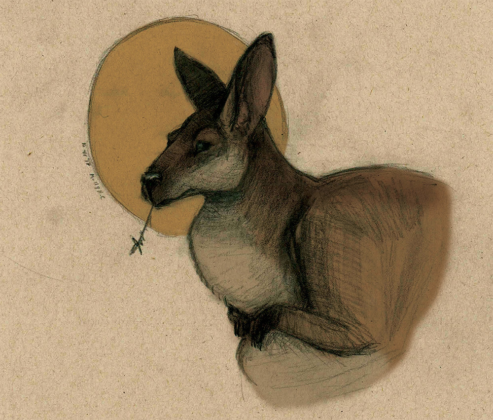 """Wallaby Portrait""