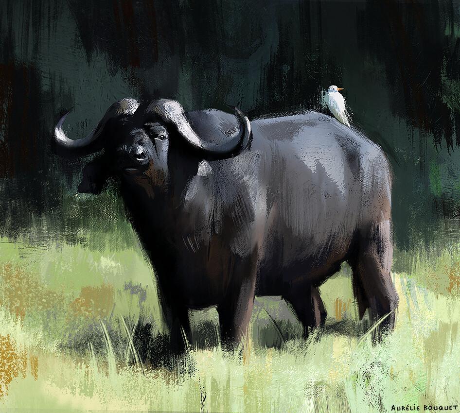Le buffle d'Afrique