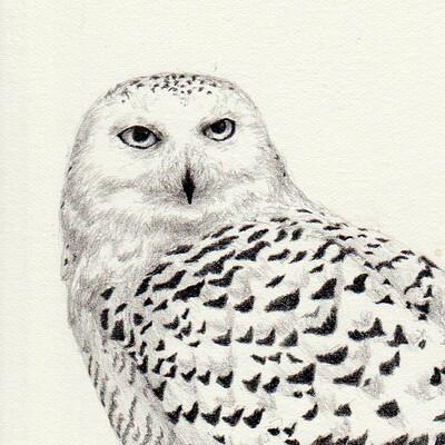 Ergo proxy snow owl preparatory sketch