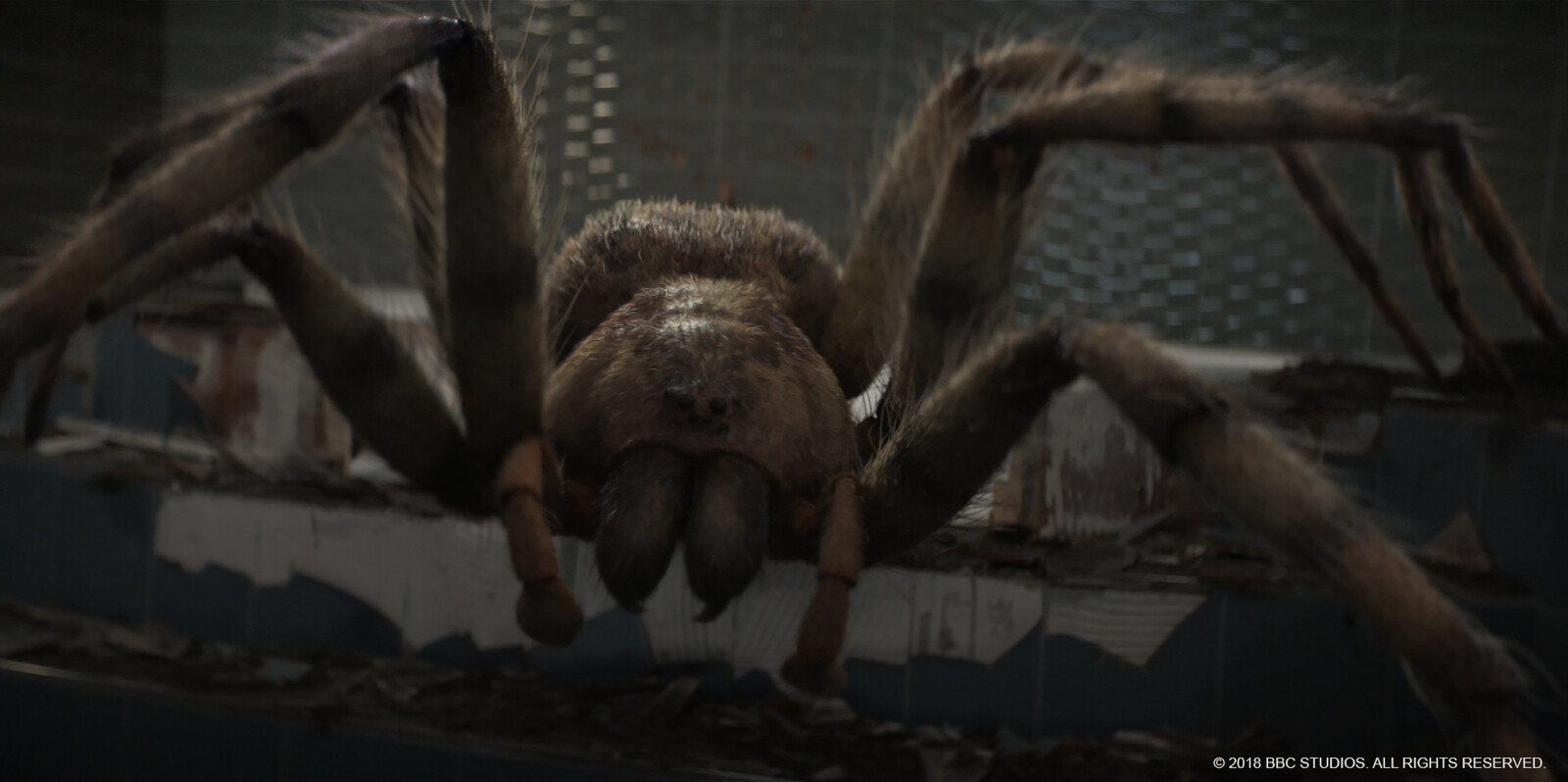 Giant spider - shot lighting