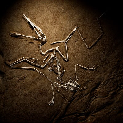 Rebecca sinclair pterodactylus