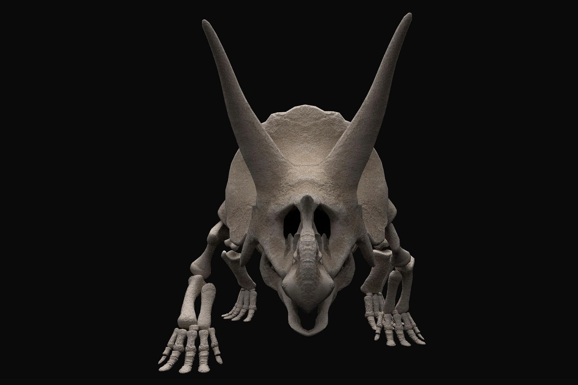 Rebecca sinclair triceratopsfront