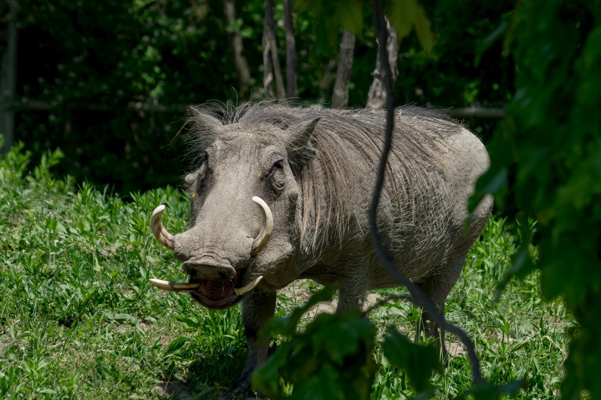 Mustafa kazmi may 30th 2018 toronto zoo 173