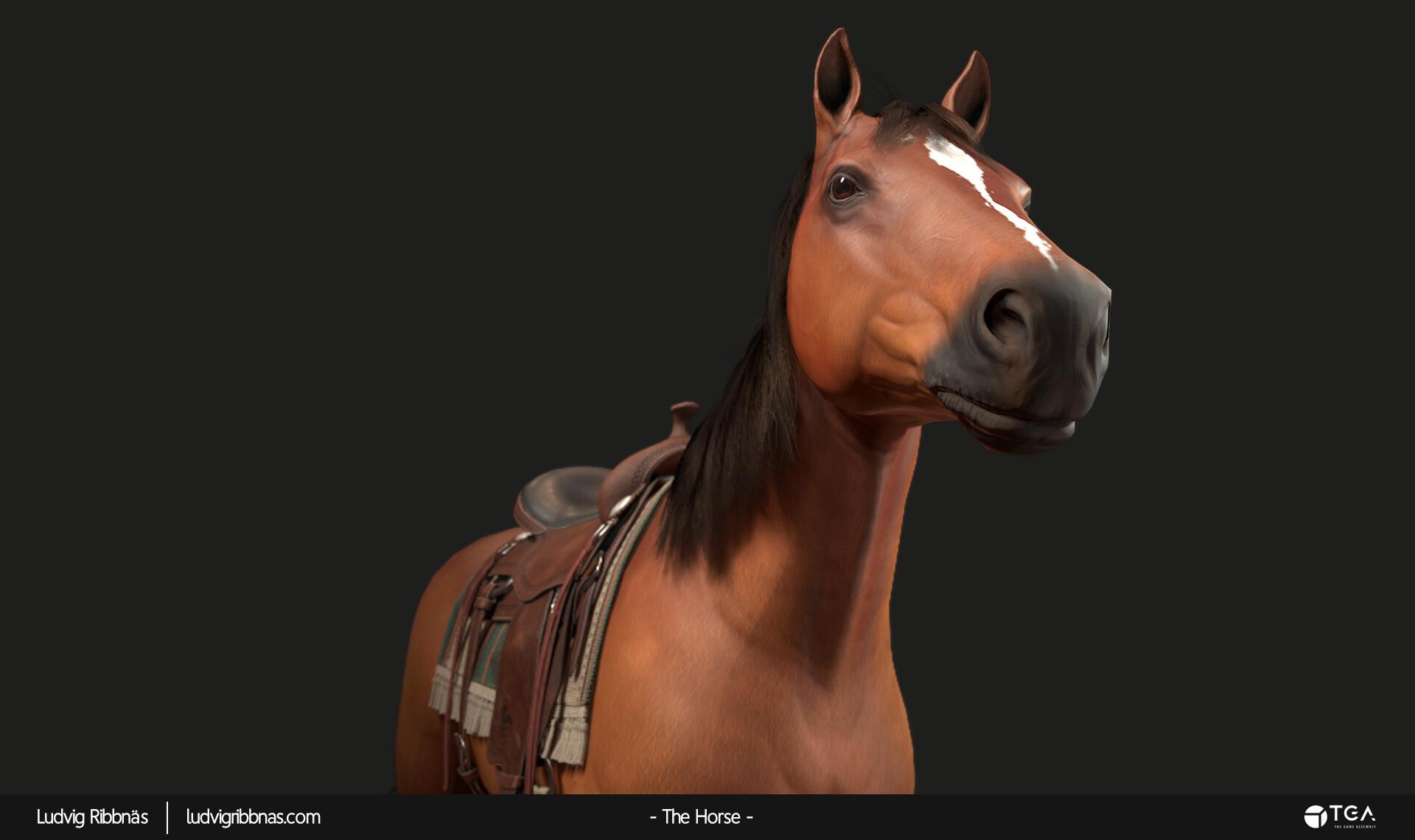 Ludvig ribbnas thehorse headcloseup