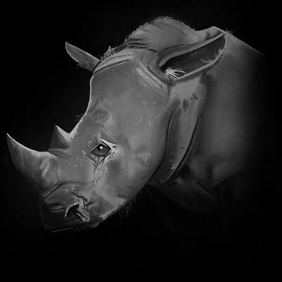 Kelly johnson johnsonkelly rhinostudy