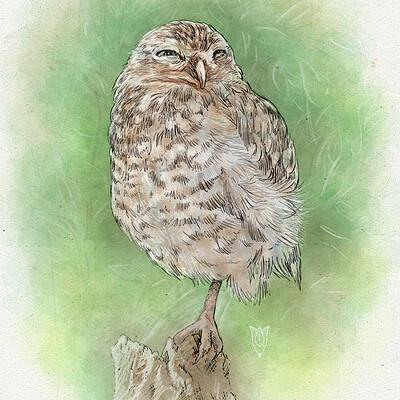 Olga dannik owl