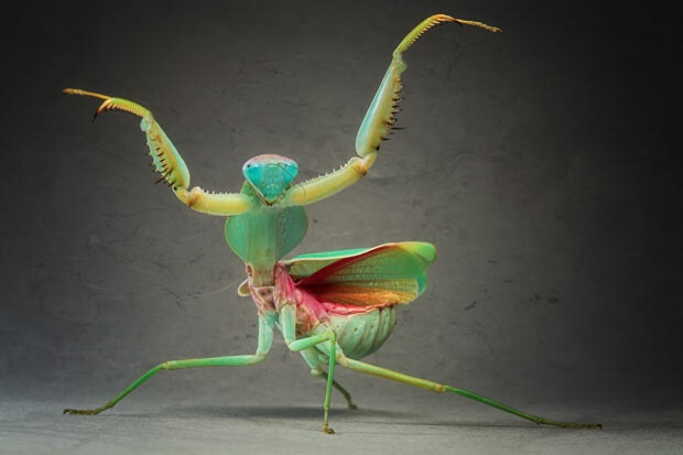 Moutaz k maudy praying mantis kung fu