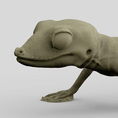 NMoQ Selvin's Gecko